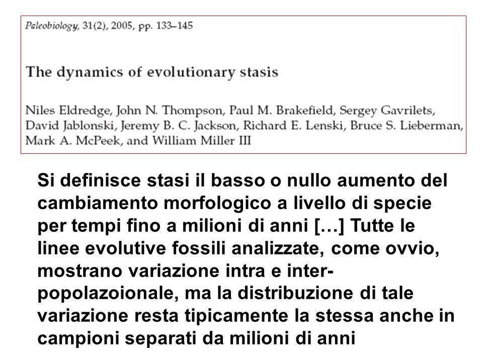 Si definisce stasi il basso o nullo aumento del cambiamento morfologico a livello di specie per tempi fino a milioni di anni […] Tutte le linee evolutive fossili analizzate, come ovvio, mostrano variazione intra e inter- popolazoionale, ma la distribuzione di tale variazione resta tipicamente la stessa anche in campioni separati da milioni di anni